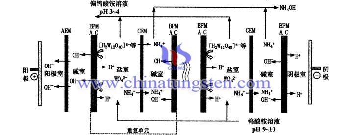 雙極膜電滲析法製備偏鎢酸銨溶液圖片