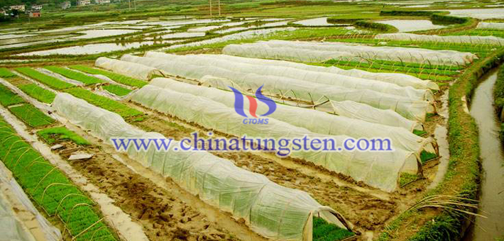 dark blue nano tungsten oxide applied for heat insulation agricultural film picture