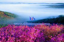 双鸭山图片